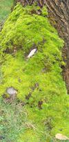 flowers: moss