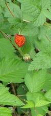 flowers: salmonberry fruit